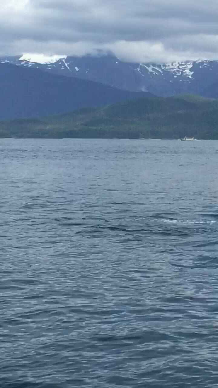 We've had some amazing whale watching days and it's a bonus when the orcas appear.   They're always on the move   Here i...